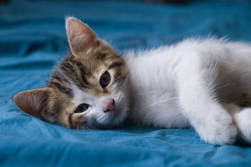 chatons dans le lit. Black Bedroom Furniture Sets. Home Design Ideas