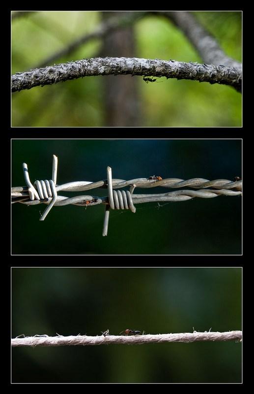 Les viaducs des fourmies Tryptique-fourmies